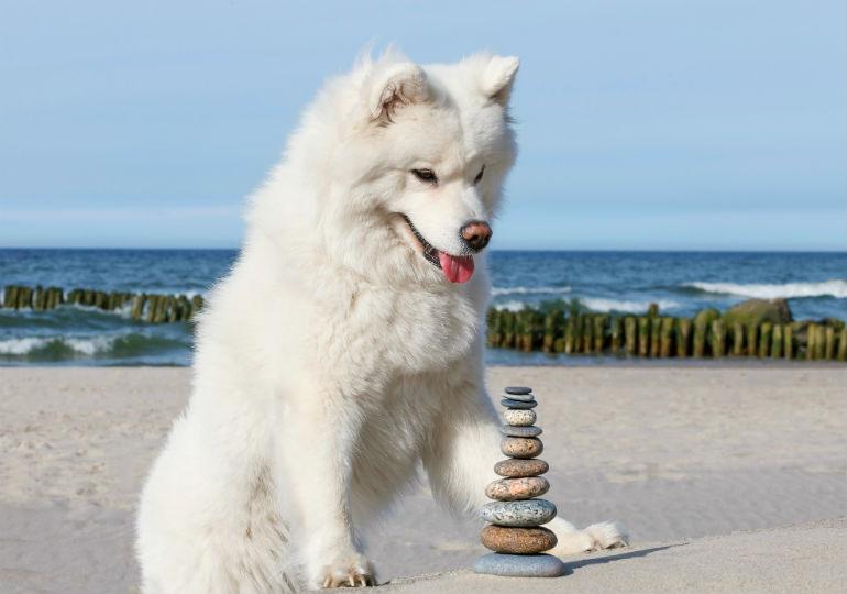 Собака может проглотить камни и другие несъедобные предметы
