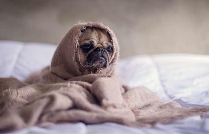 Эпилепсия у собаки лечение как прекратить приступы