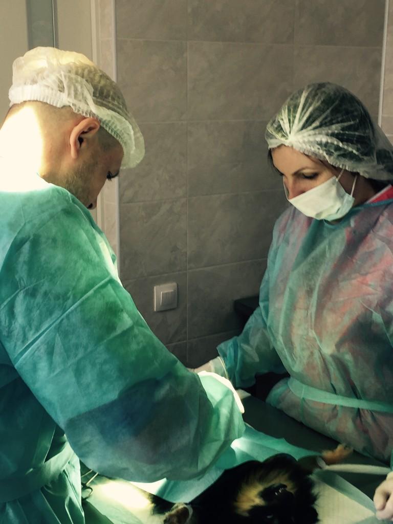 """Идет операция в ветеринарной клинике """"Сова"""""""