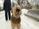 Обморожение у собак