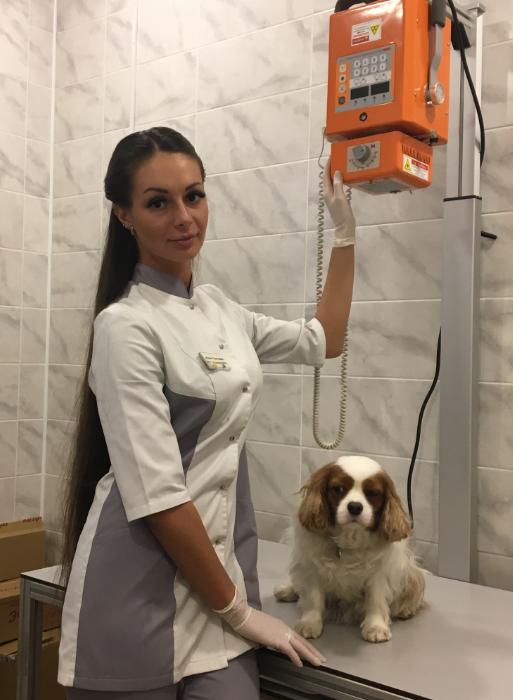 Проводится рентген собаке