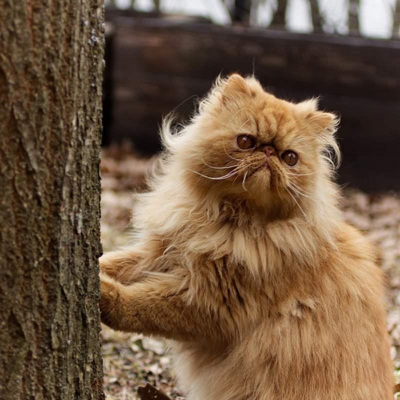 Нужно беречь кошку от теплой влажной погоды