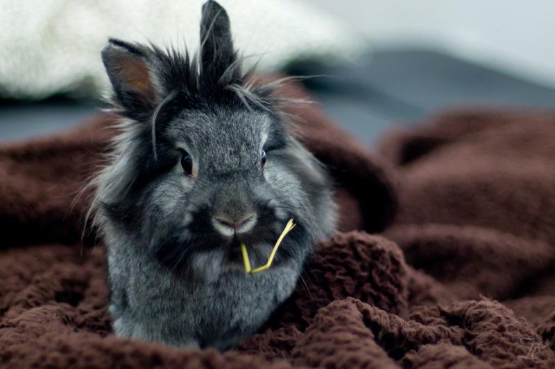 декоративный кролик-2