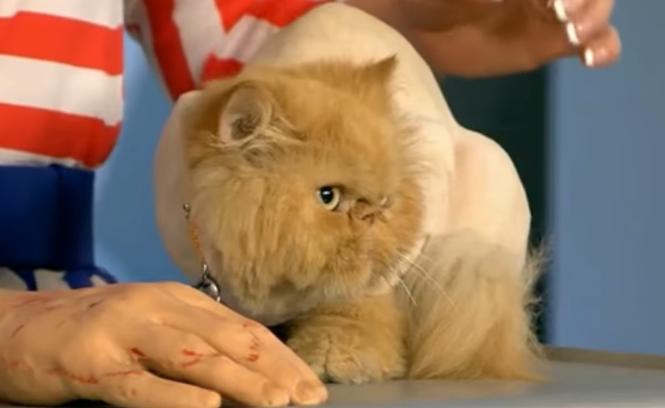 хламидиоз кошки как лечить
