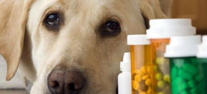 хламидиоз у собак 2