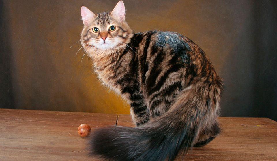 Кошка взрослая фото