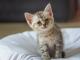 Гемоглобинурия и миоглобинурия у кошек