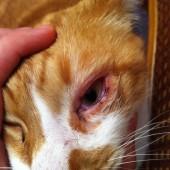Забота о кошке должна быть продолжена дома