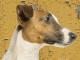 Отравление свинцом у собак