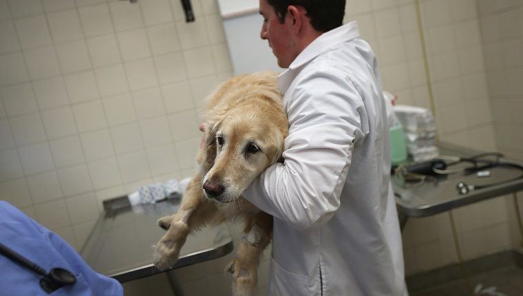 диагностика отравления свинцом собаки