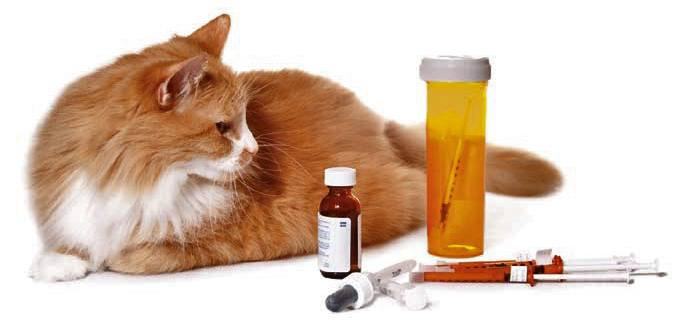 Лечение нефрита у кошки - лекарственные средства, настои и диета