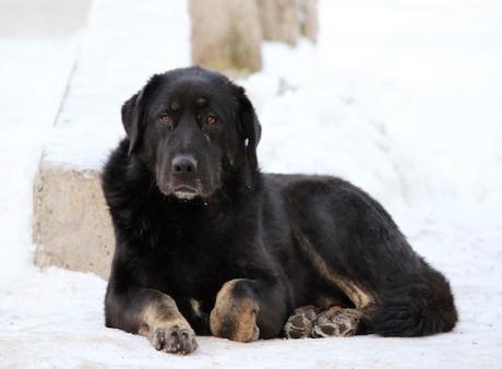 Обморожение у собаки