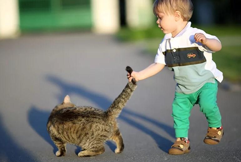 Ребенок тянет кота за хвост