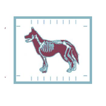 Рентген для животных
