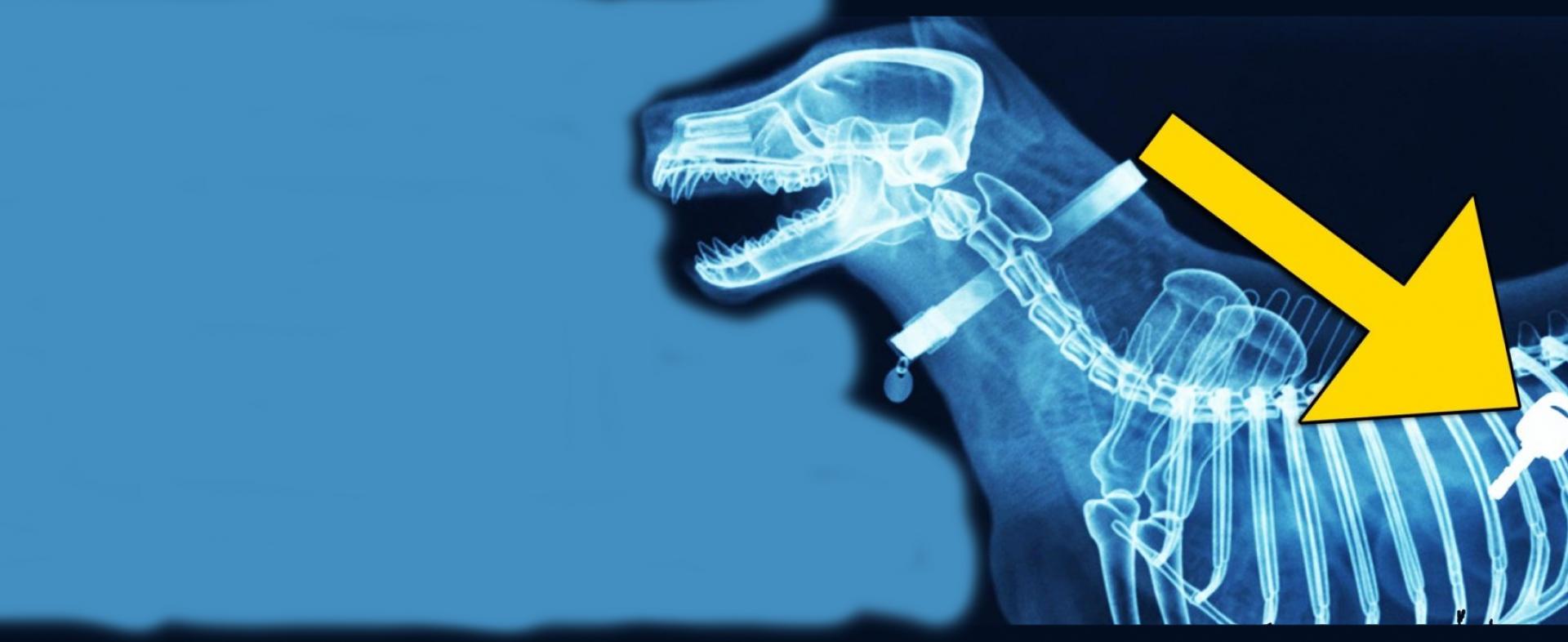 """В ветеринарной клинике """"Сова"""" в Чехове можно сделать рентген животным"""