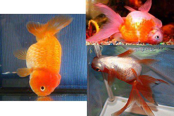 Рыбка плавает кверху брюхом или тонет