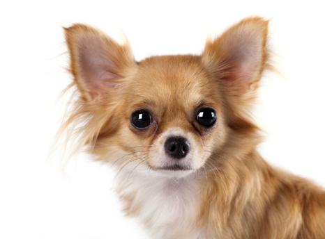 Травма глаз у собаки