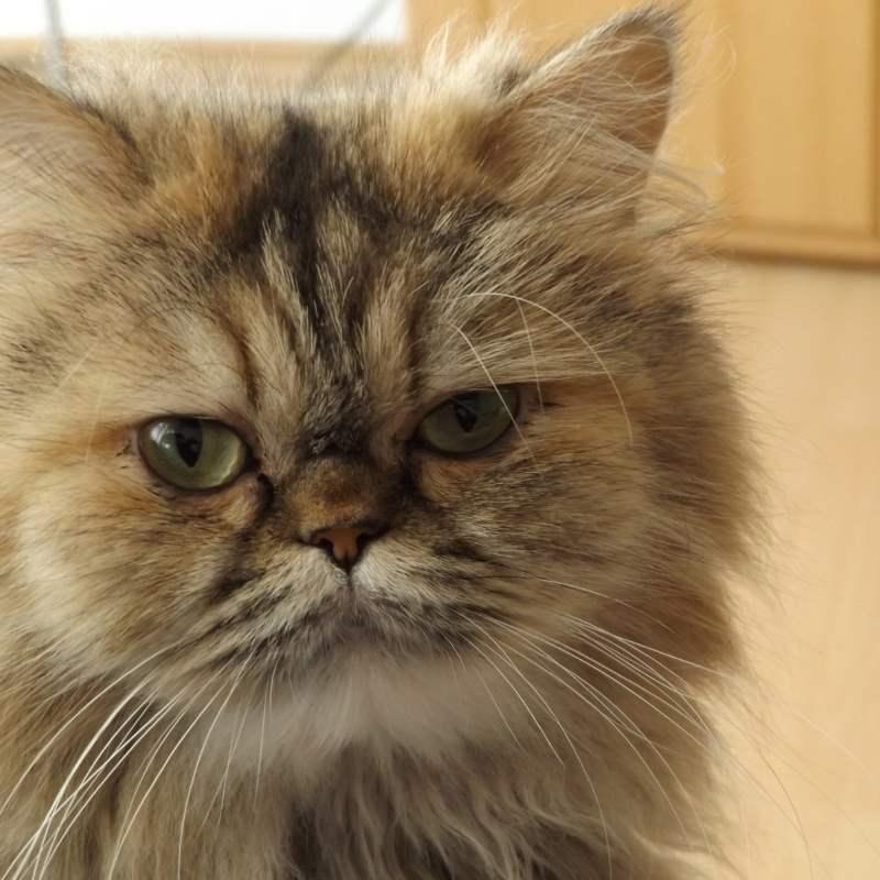 Кошка в ветклинике