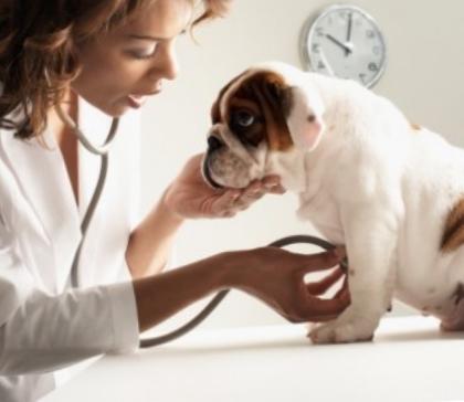 Ветеринар должен убедиться в том, что собака здорова
