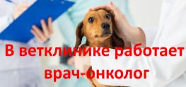 врач-онколог-ветеринар-2